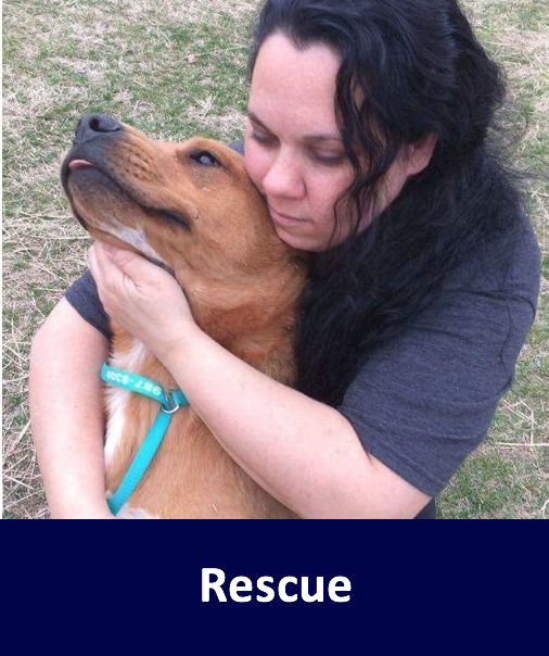 Home Canine Humane Network Is A Non Profit Dog Rescue Adoption